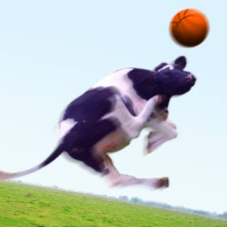 Jumping Cow mit Basketball