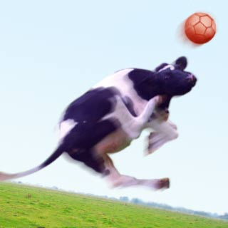 Jumping Cow
